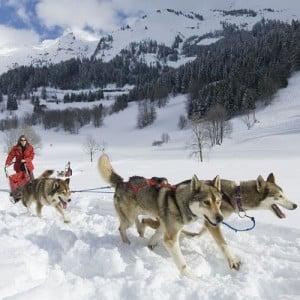 chien de traîneau Sport outdoor La Clusaz hiver